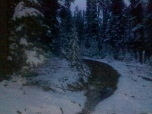 Warning snow covered pine trees may cause hallucinations.