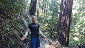 Pondering the future in the Redwoods